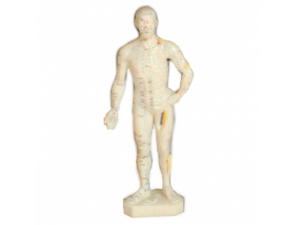 Модель для акупунктуры - Мужчина (26см)